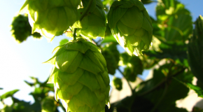 10 step guide to liking IPAs and Imperial IPAs